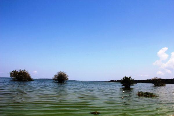 floating-tree-bayimba-lunkulu