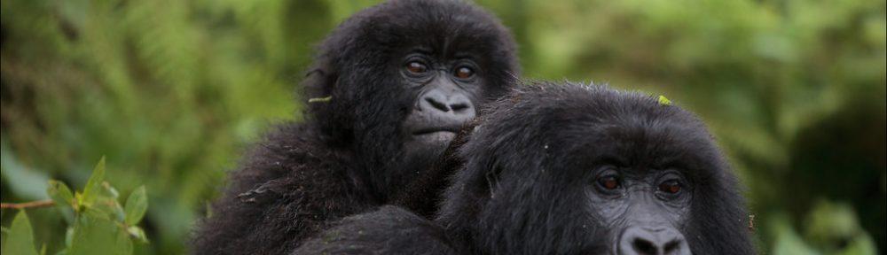 parc-virunga-gorilles-tourisme